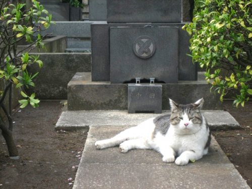 animaux,télépathie,paranormal,parapsychologie, 6e sens,chat,chien,oiseauau